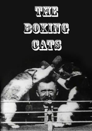 Фільм «Боксирующие коты (проф. Уэлтона)» (1894)