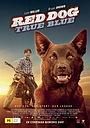 Фильм «Рыжий пес: Самый верный» (2016)