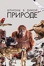 Сериал «Шпион в дикой природе» (2017 – ...)