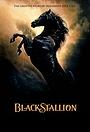 Сериал «The Adventures of Black Stallion» (1990 – 1993)