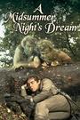 Фильм «Сон в летнюю ночь» (1968)