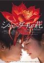 Фільм «Цветок Шанидар» (2013)