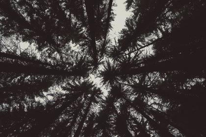 «Тени незабытых предков» — кадры