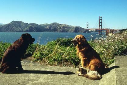 «Дорога домой 2: Затерянные в Сан-Франциско» — кадры