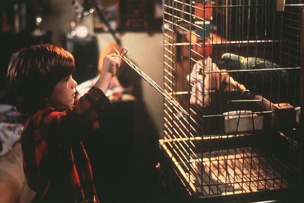 Фільм «Сам удома 3» (1997): Алекс Д. Лінц 600x400