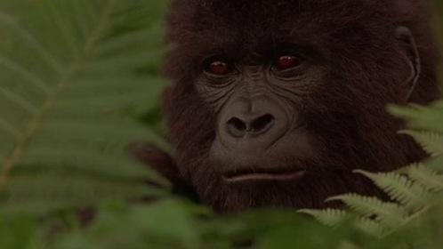 «Могучий Джо Янг» — кадры