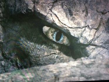 «Сердце дракона 4» — кадры