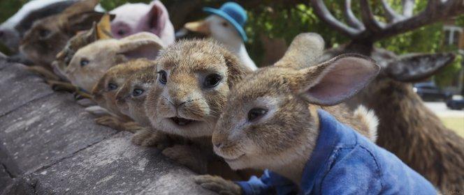 «Кролик Петрик: Втеча до міста» — кадри