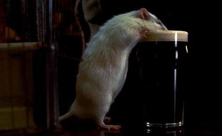 «Мистер крыс» — кадры