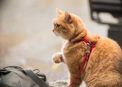 «Рождество кота Боба» — кадры
