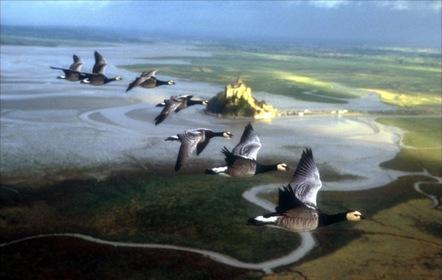 «Птицы» — кадры