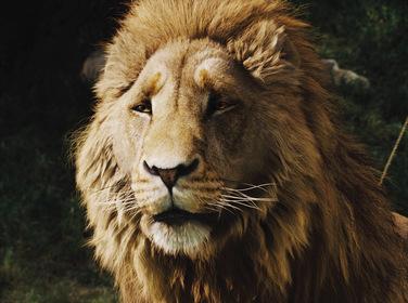 «Хроніки Нарнії: Лев, чаклунка і чарівна шафа» — кадри