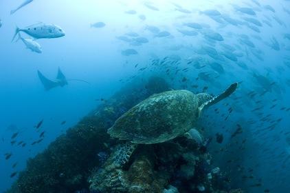 «Океаны» — кадры