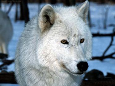 «Вижити серед вовків» — кадри