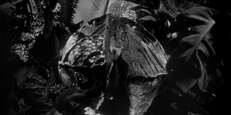 Фільм «Вторгнення викрадачів тіл» (1955): 930x465
