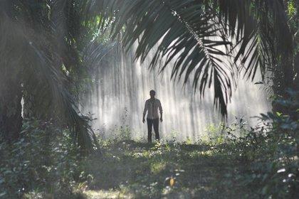 «Джунгли» — кадры