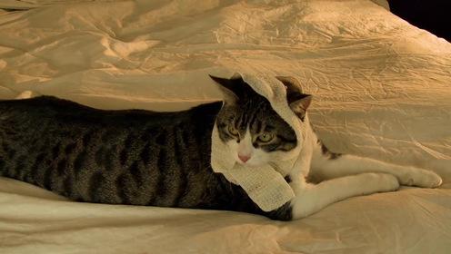 «Говорящий кот!?!» — кадри