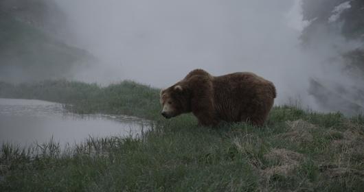 «Земля медведей» — кадры