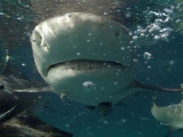 «Акула-монстр: Мегалодон жив» — кадри