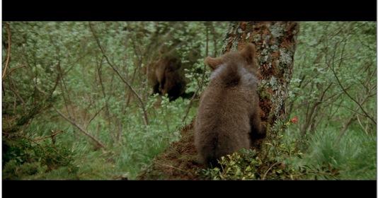 «Медведь» — кадры