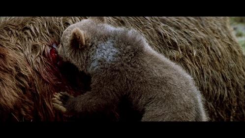 «Ведмідь» — кадри