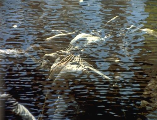 Фильм «Поваккатси» (1988): 500x382